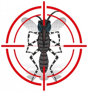 stock-vector-nature-aedes-aegypti-mosquito-with-stilt-sights-signal-or-target-front-ideal-for-informational-375645658